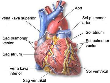Kalp yetersizliği nasıl tedavi edilir ?